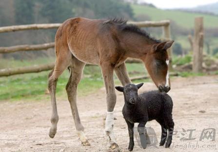 双语:小动物的奇妙友谊