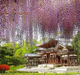 日本的寺院园林的境内春色【有四家:平等院、天満宮、乙訓寺、大田神社】 - garden216 - garden216的博客