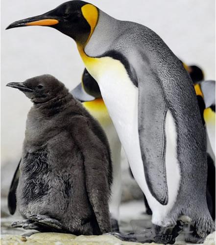 【双语组图】超可爱的动物宝宝