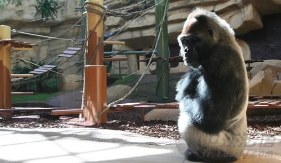守护生命:全球十大最美的动物园(组图)