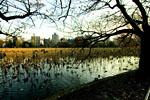 不忍池是位于上野公园内的天然池塘,游客可以在池中体验划船的乐趣,还可以在不同季节欣赏各种不同的动植物。在森鸥外的《雁》和川端康成的《帽子事件》等文学作品中均有涉及。此外,位于池中央的弁天岛上有许多形状独特的石碑,非常有名。